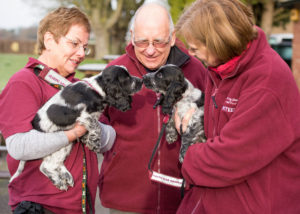 Hearing Dogs Shoot 80